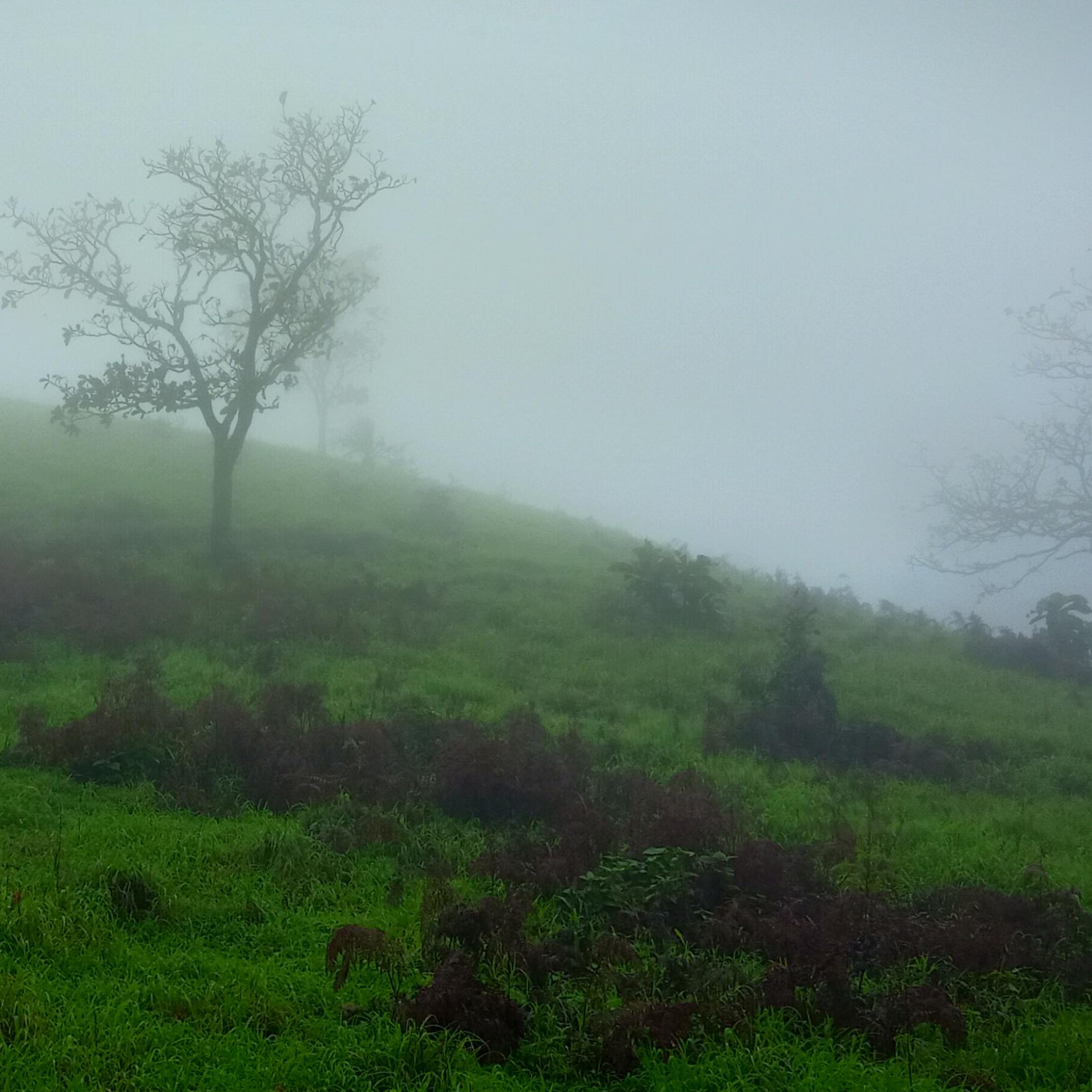 Kodachadri in monsoons